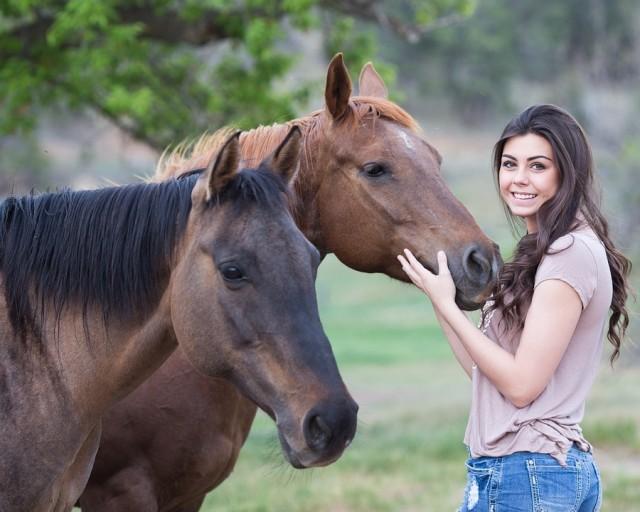horses-1996285_960_720