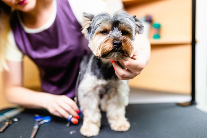 Start A Home Based Dog Grooming Business