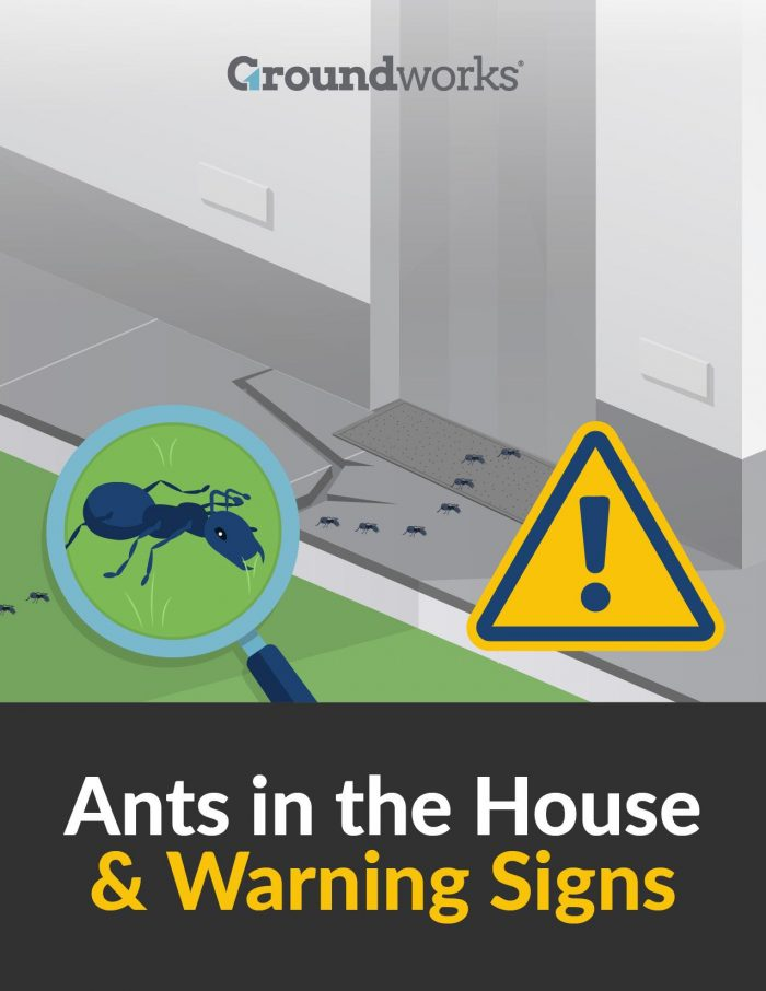 Ants in the House Warning Signs